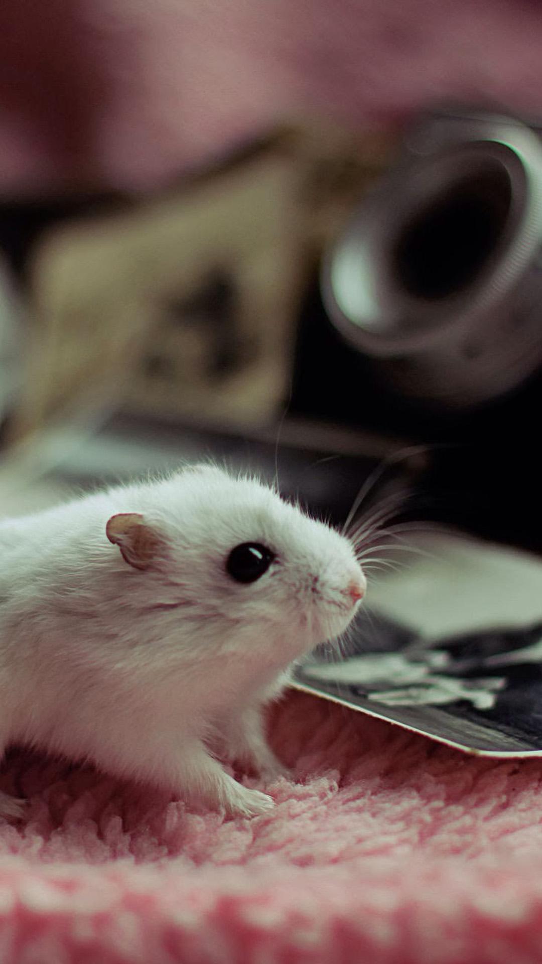 萌宠小老鼠高清手机壁纸